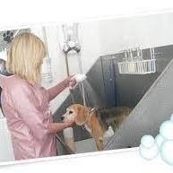 Hairs & Grace's Professional Dog Grooming