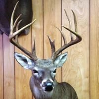 Wild Creations Taxidermy