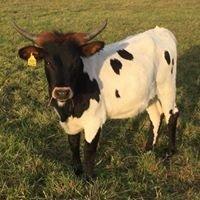 Walters Family Farm Cattle Company