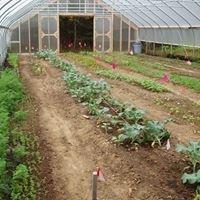 Long Shadow Farm