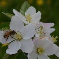 Golden Acres Honey Bee Farm