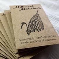 Milkweed Medicinal Seeds