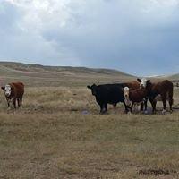 Doenz Ranches Ltd.