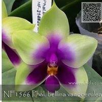 Norman's Orchids- orchids.com