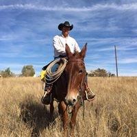 Ranch hand fencing