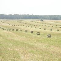Haystack Farms, Inc.