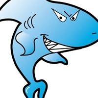 Sharky's Bagels