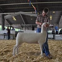 Montadale Sheep Breeders Association - Brookings, United States