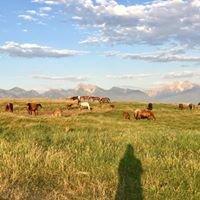 Triple G Livestock & Quarter Horses