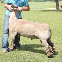 ET Club lambs