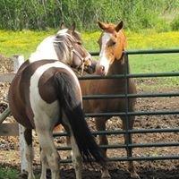 Spirit Reins Ranch
