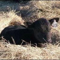 Peper Livestock