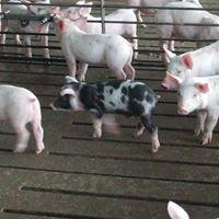 Hagenbuch Family Farms