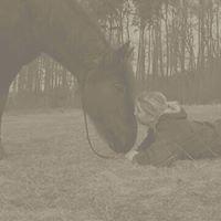 Tine's Pferdeshop