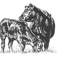 Iowa Angus Association
