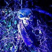 Dragon Unborn Haunted Trails