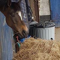 Inistioge Equestrian Centre