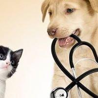 Limerick Mills Animal Hospital