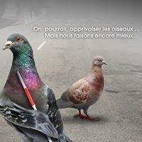 BIRD SYSTEM FRANCE