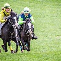Mint Meadows Pony Racing