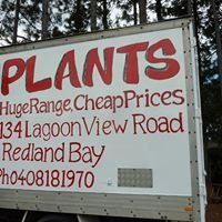 Lagoon View Nursery(Queenslands Cheapest Plants)