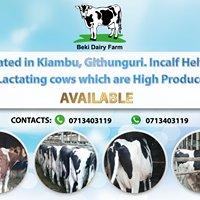 Beki Dairy Farm