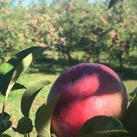 AppleStock Orchard