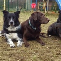 Hundeschule und Hundepension