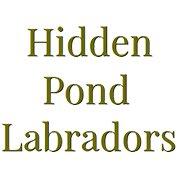 Hidden Pond Labradors
