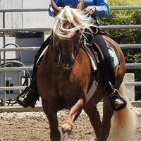 Kacey Equitation and Sport Ponies
