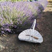 Enchanted Paths Lavender
