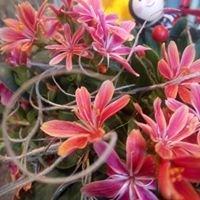 Blumen Wunderlich