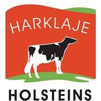 Harklaje Holsteins