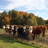 Fat Cow Farm Charlotte VT