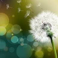 Dandelion Health and Wellness