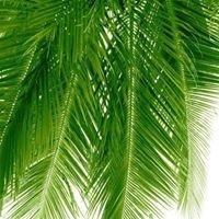 Palmgarden lda