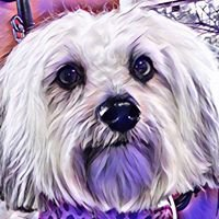 All About the Dogs Grooming Salon, LLC
