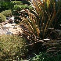 Hi Desert Gardens
