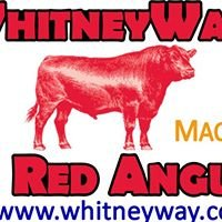 Whitney Way Red Angus