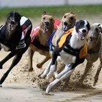 Longford Greyhound Track