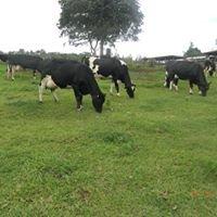 DKUT FARM CO. LTD