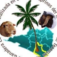 Asociación Especializada en Ovinos y Caprinos de Tecomán