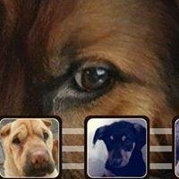 Leskovački Azil za pse