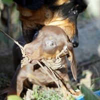 Hundeschule Fairdog