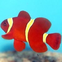 Coralville Bay Tropical Fish & Supplies