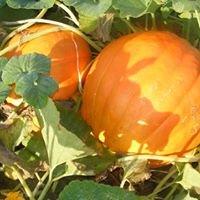 Sleepy Hollow Farm Pumpkin Patch