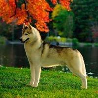 Keahi Siberian Huskies