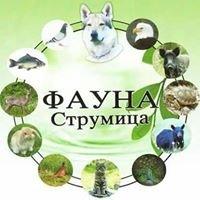"""Друштво за заштита на животните """"Фауна"""" - Струмица"""