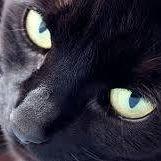 Il Gatto Nero gioielli spa