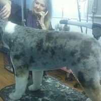 K9 Kreations Inc Dog-Pet Grooming Salon & Daycare,  Westminster, Md area